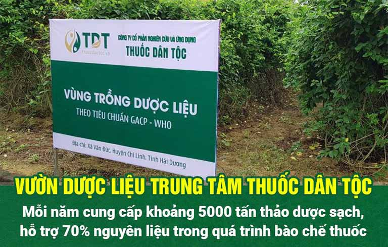 Vườn dược liệu sạch của Trung tâm Thuốc dân tộc