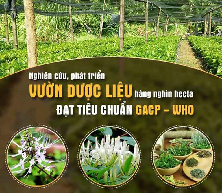 Dược liệu được thu hái tại vườn, đảm bảo sạch và đạt tiêu chuẩn an toàn với người bệnh