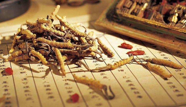 Đông trùng hạ thảo là sự kết hợp giữa côn trùng và thực vật
